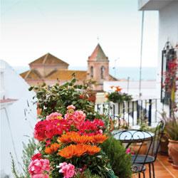 Foto azotea flores con iglesia al fondo